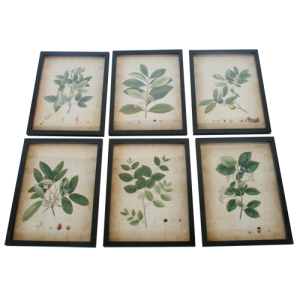 SET OF 6 GREEN FERN FRAMED PICTURES