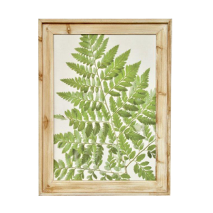 GREEN FERN FRAMED PICTURE